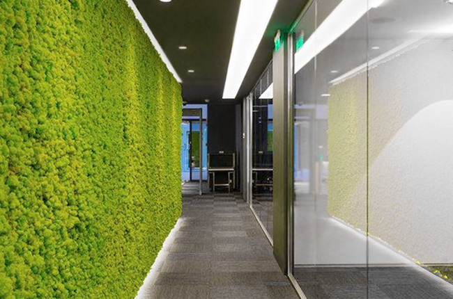moss wall as a decorative element in the office